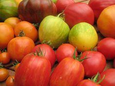 """Auch wenn jetzt Wörter wie """"Zahnrad"""", die Farben """"braun"""", """"gelb"""" und """"pink"""" fallen, es geht um Tomaten denn rot und rund ist langweilig!"""