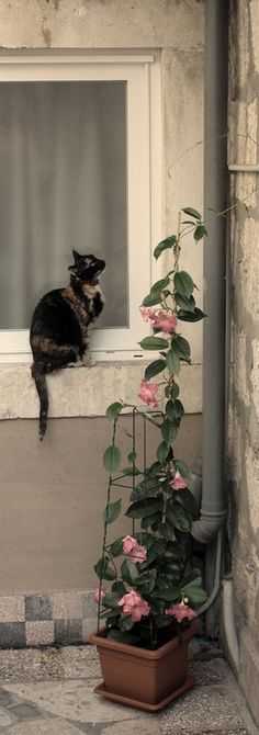 Kitty, Kitty, quite contrary, How does your garden grow?