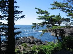 Lived in Ucluelet, British Columbia on two separate occasions. Awed by the natural beauty, but less than thrilled by the seemingly constant rain. Vancouver Island, Beautiful Scenery, British Columbia, Trip Advisor, Natural Beauty, Places To Go, Tourism, Canada, America