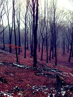 Niekde v lese ❤