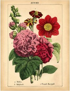 Gorgeous Autumn Flowers Printable! - The Graphics Fairy