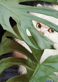 """""""leaves"""" cat collage by Stephen Eichhorn Animal Gato, Amor Animal, Mundo Animal, Crazy Cat Lady, Crazy Cats, I Love Cats, Cool Cats, Animals Beautiful, Cute Animals"""