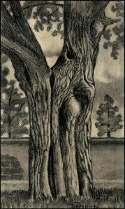 Jan Tarasin - Tree