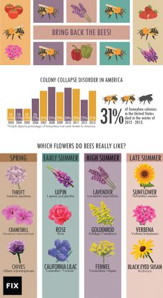 How To Urban Garden Which flowers attract bees? Here's how to increase your garden's bee population. - Colony Collapse Disorder is reducing the global bee population. Here's how you can make your garden a safe haven for bees. Permaculture, Save The Bees, How To Keep Bees, Bee Keeping, Gardening Tips, Organic Gardening, Kitchen Gardening, Gardening Services, Urban Gardening