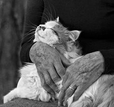 Hands loving cat