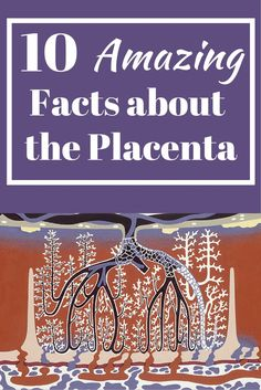 10 Amazing Facts about the Placenta