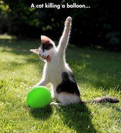 A cat killing a balloon