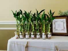 Bamboo favors