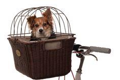 Noodle and I need a bike with this Nantucket Somerset Pet Bike Basket...like ASAP!