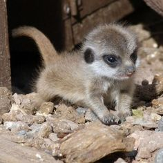 Surprisingly Cute Baby Animals   here to find out more     #cute baby Animals #Baby Animals