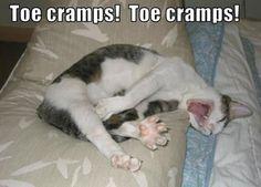 Oh my gosh, poor poor kitty!