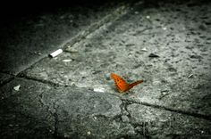 Concrete butterfly. Streets of Buenos Aires, Argentina. Shot and edit by Monica Mikhael. https://flic.kr/p/nPWFCv