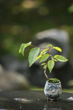 Bonsai - Gardening For You