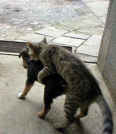 犬と猫の奇妙な関係写真いろいろ