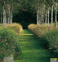 strakke lijn met sierlijke grassen