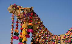 Decorated Camel in the Thar Desert 2C Jaisalmer 2C Rajasthan 2CIndia