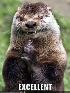 An Evil Otter meme. Caption your own images or memes with our Meme Generator. Otters Funny, Cute Funny Animals, Funny Cute, Baby Otters, Otter Meme, River Otter, Sea Otter, Mundo Meme, Animal Memes