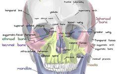 X-Ray Tube Diagram   Standard stationary anode x-ray tube ... Skull X Ray Views Chart
