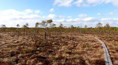 Isosuon kansallispuisto - Samuli Seppälä