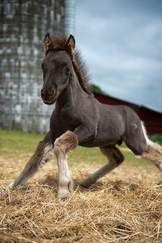 New Born, trying to stand for the first time, so sweet at this stage but will grow into a beautiful horse!