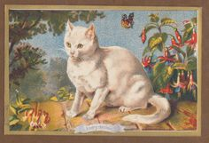 Possibly Helena Maguire. Sim. to card with brown tabby in picnic hamper and white cat adjacent.