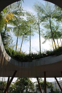Sacred Grove, Singapore - Fluid Structures