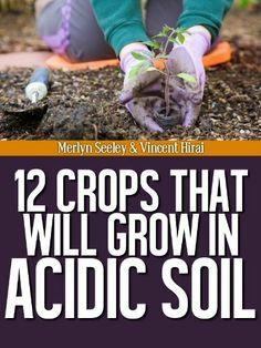 12 Crops That Will Grow In Acidic Soil by Merlyn Seeley, http://www.amazon.com/gp/product/B008J51VCO/ref=cm_sw_r_pi_alp_-6j.pb0KCFFKZ