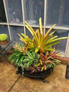 A Bromeliad arrangement I created for a friend