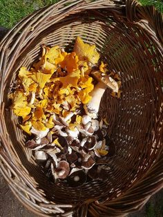 Chanterelle, field mushrooms and a cep