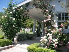 Full Bloom Cottage: An English Rose Garden