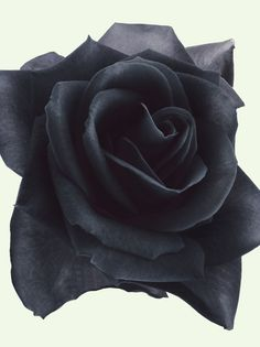 """""""You are the deep innerness of all things, the last word that can never be spoken. To each of us you reveal yourself differently; to the ship as coastline, to the shore as a ship."""" ~ II, 22 -Book of Hours   Image; Black Rose"""