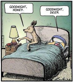 Goodnight Honey, Goodnight Deer