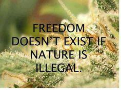 Legalize it #marijuana #legalizeit