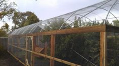 Hooped run with chicken house & fruit trees designed & built by Yummy Gardens, Melbourne