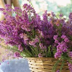 basket of heather flowers                                                                                                                                                                                 More