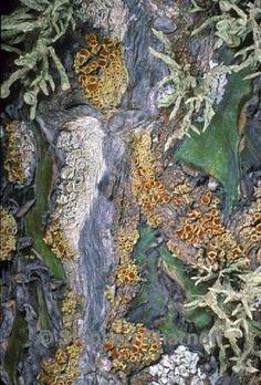 lichen by carter flynn