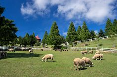 六甲山牧場 (c)YOSHITSUGU NISHIGAKI/SEBUN PHOTO