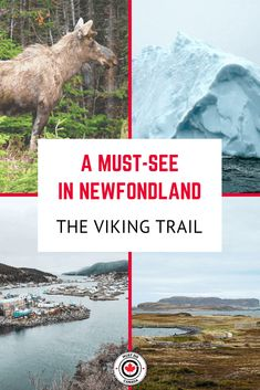 Looking for the best things to do in Newfoundland? One of the best Canada Road Trips is the Viking Trail. Here is your guide and itinerary for Newfoundland's Viking Trail. Backpacking Canada, Canada Travel, Canada Trip, Newfoundland Canada, Newfoundland And Labrador, Alberta Canada, Ottawa, Quebec, The Vikings