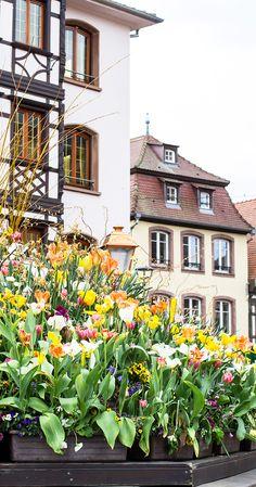 Obernai, Alsace, Fra