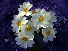 Un pomeriggio diverso dal solito...... é primavera