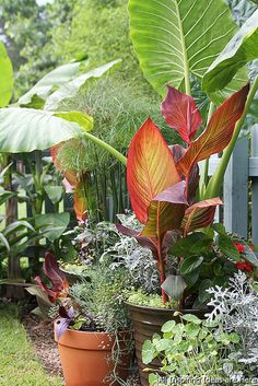 16 Awesome Summer Container Garden Design Ideas 12 Easy Container Garden Projects you should try for your outdoor spaces Indoor Gardening Supplies, Container Gardening, Gardening Tips, Gardening Services, Gardening Books, Diy Garden, Garden Projects, Garden Landscaping, Planting Fruit Trees