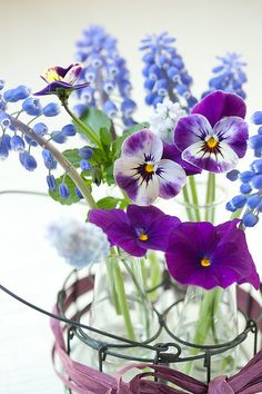 hyacinths (muscari), pansies, & petunias - pretty combo