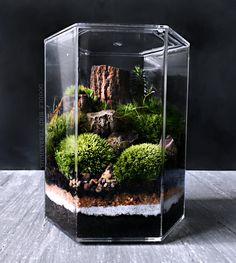 Terrarium de bureau paysage dans bocal en hexagone par DoodleBirdie