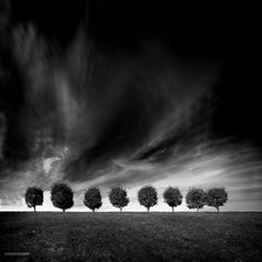 """""""Eight"""" by landscape photographer Alexey Antonov.  Black and white image of eight trees bordering the Gulf of Finland."""