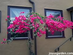 Barbara Karst, Bougainvillea, So Much More Than Just A Vine