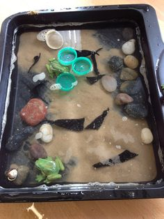 more hands-on for the kids Water Cycle Activities, Frog Activities, Learning Activities, Preschool Science, Science Fair, Life Science, Science Ideas, Teaching Science, Sensory Table