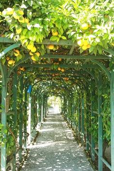 Citrus Garden, Edible Garden, Outdoor Pool, Outdoor Gardens, Diy Arbour, Covered Garden, Farmhouse Garden, Back Gardens, Garden Design