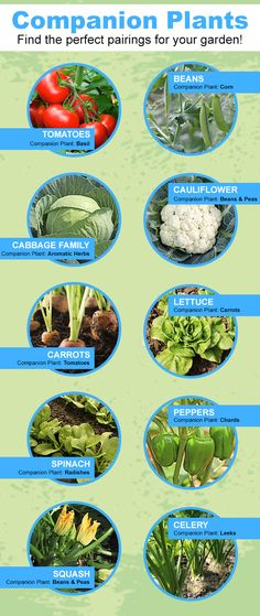 Find your plant's perfect companion and pair them together in your garden!