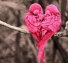 Mira que bonito preciosa, un corazón ❤.........#FREEYUYEE 1000!!!
