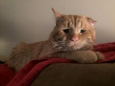 Couple Adopt Saddest Cat in the Shelter – In one hour the Transformation is Incredible